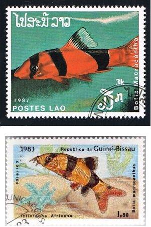 Francobolli del Laos e della Guinea Bissau dedicati al Chromobotia macracanthus o pesce pagliaccio