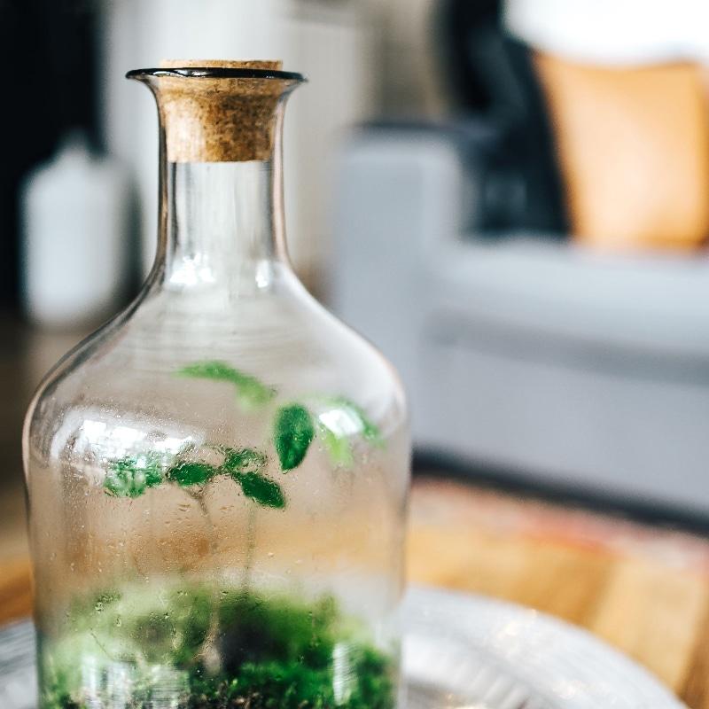 Condensa sulle pareti di un piccolo giardino in bottiglia