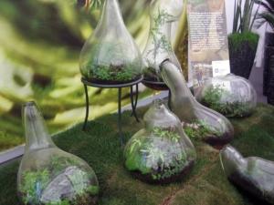 Piccoli Bottle Garden, giardini in bottiglia
