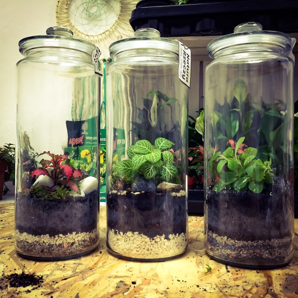 Bottle Garden a clima umido