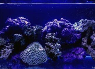 La maturazione dell'acquario marino tropicale